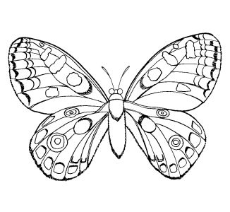 Amazing Here Are The Top Coloring Pages For Girls. My Kids Could Color A Girls  Coloring Page All Day Long, Every Day.