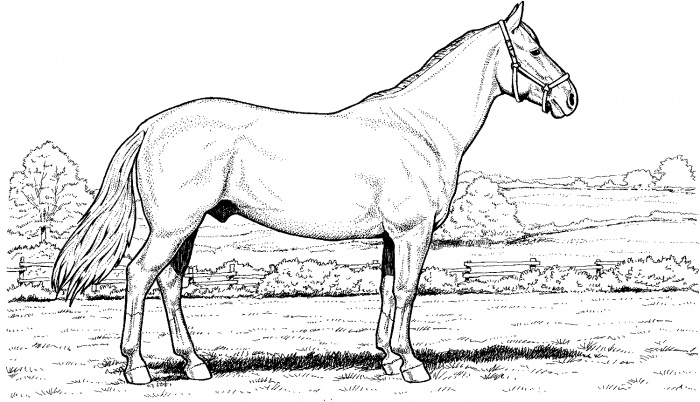 Friesian horse printing pictures coloring pages ~ Horse Coloring Pages 2019: Best, Cool, Funny