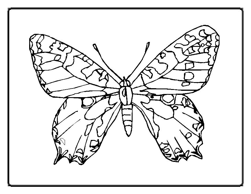 Butterfly Coloring Picture Contegricom