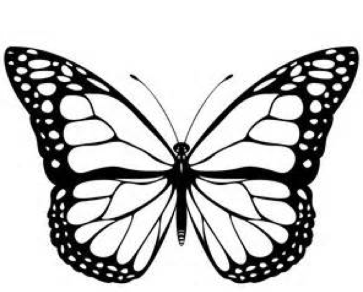 Butterfly Coloring Page 2019 Best Cool Funny