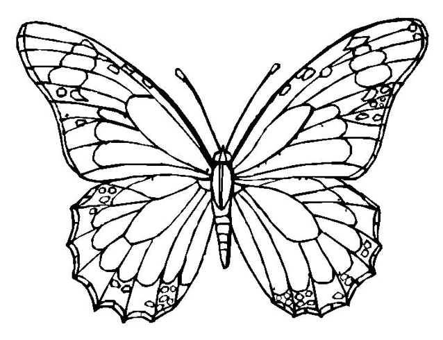 butterfly coloring page - dr. odd