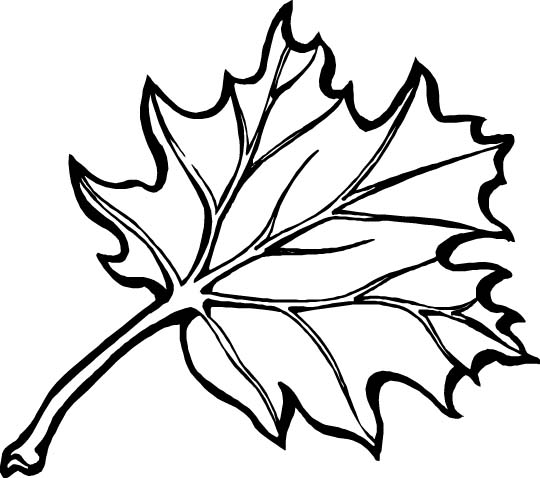 fall flowers coloring pages - photo#8